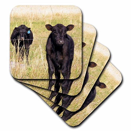 3dRose Jos Fauxtographee- Cows - Two Black cows in a meadow being utterly tickled - set of 4 Ceramic Tile Coasters (Cow Coaster)