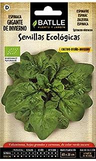Semillas Ecológicas Hortícolas - Acelga verde penca ancha 3 ECO ...