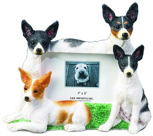 Rat Terrier Picture Frame Holds Your Favorite 4 x6 Inch Photo,  A Hand Painted Realistic Looking Rat Terrier  Family Surrounding  Your Photo. This Beautifully Crafted Frame is A Unique Accent To Any Home or Office. The Rat Terrier  Picture Frame Is The Perfect Gift For Rat Terrier  Owners And Lovers!