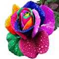 Braceus 200 Pcs Rainbow Rose Seeds Colorful Flower Seeds for Garden Decor