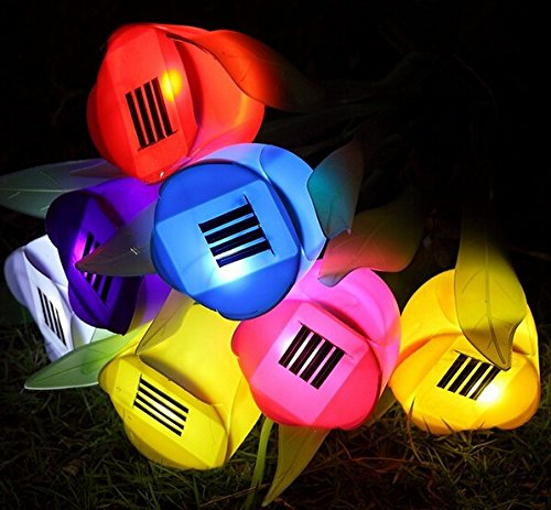 Tulip Garden Lights - 9