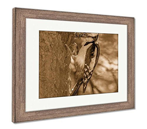 (Ashley Framed Prints Woodpecker On Tree with Prey in Its Beak, Wall Art Home Decoration, Sepia, 30x35 (Frame Size), Rustic Barn Wood Frame, AG5138605)
