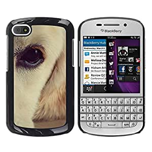 PC/Aluminum Funda Carcasa protectora para BlackBerry Q10 Labrador Retriever White Brown Eye Dog / JUSTGO PHONE PROTECTOR