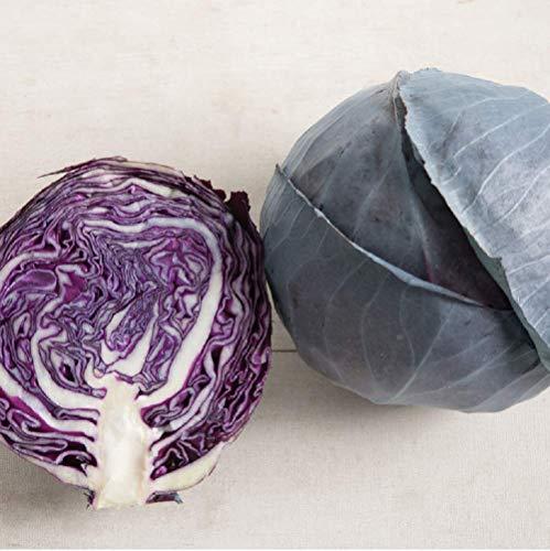 Sweet Cabbage - David's Garden Seeds Cabbage Omero SL2345 (Green) 50 Non-GMO, Hybrid Seeds