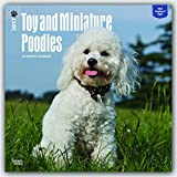 Poodles, Toy and Miniature 2017 Square (Multilingual Edition)
