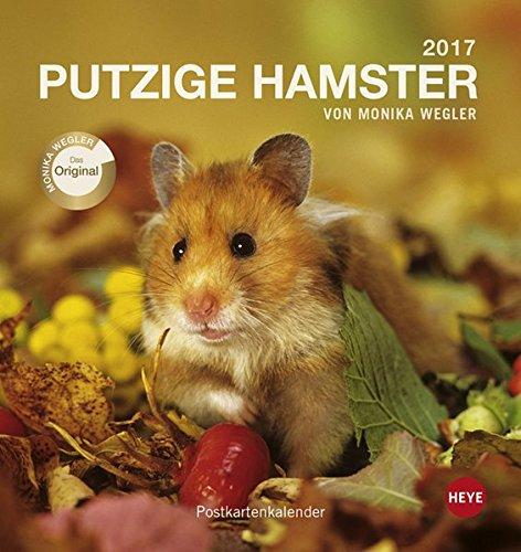 Putzige Hamster Postkartenkalender - Kalender 2017
