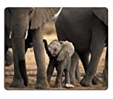 Animal Wildlife Elephant Baby Pack Tusk Africa Mouse Pads Customized Made to Order Support Ready 9 7/8 Inch (250mm) X 7 7/8 Inch (200mm) X 1/16 Inch (2mm) High Quality Eco Friendly Cloth with Neoprene Rubber Luxlady Mouse Pad Desktop Mousepad Laptop Mousepads Comfortable Computer Mouse Mat Cute Gaming Mouse pad
