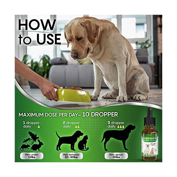 Natural ANTIBIOTICS for Dogs / ANTIBIOTICS Alternative for Pets/ Kennel Cough Medicine for Dogs / UTI Treatment / ANTIBIOTICS for Cats 5