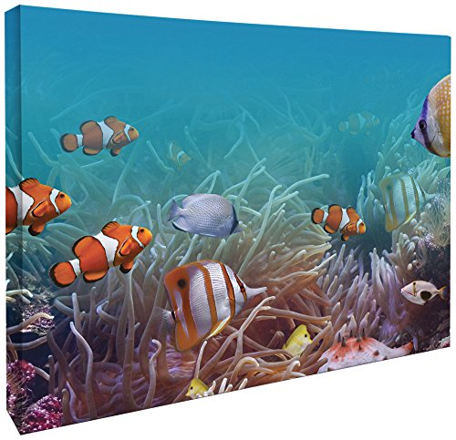 JP Londres cnv2003 Galería Wrap Heavyweight Colorful Nemo Angelfish Clownfish Submarino Acuario Canvas Art Pared...