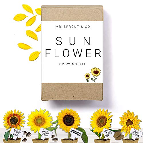 Sunflower Seed Starter Kit - Flower Seeds for Planting an Indoor Garden Kit | Starting Indoor Gardening Grow Kit with Plant Soil Mix | Growing Jumbo Sunflower Seeds To Plants Indoors - By Mr Sprout