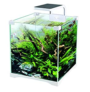 Kit Acuario 16 litros con Filtro + Pantalla LED ¡Envío 24H!: Amazon ...