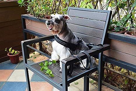 HenLooo Medias de arnés para Perros, arneses para Mascotas al Aire ...