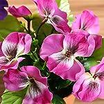 DANLAN-2PCS-Artificial-Flowers-Fake-Silk-Pansy-Arrangements-in-Pots-Desktop-Potted-Bonsai-for-Home-Office-Decoration-Yellow-Dark-Pink