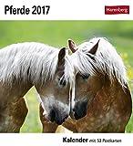 Pferde - Kalender 2017: Kalender mit 53 Postkarten