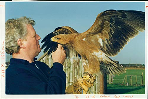 Tawny Eagle - Vintage photo of Bruce Berry with a African tawny eagle.