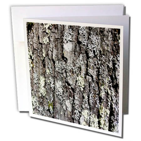 One Light Bark (3dRose TDSwhite – Miscellaneous Photography - Oak Tree Sunlight - 1 Greeting Card with Envelope (gc_285336_5))