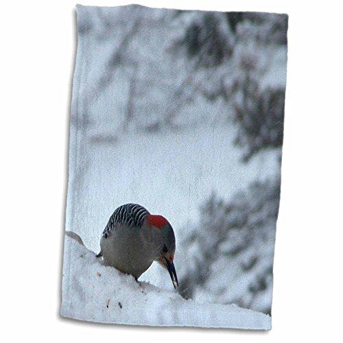 3dRose Beverly Turner Bird Photography - Red Headed Woodpecker - 15x22 Hand Towel (TWL_17493_1)