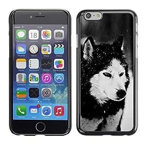 YiPhone /// Prima de resorte delgada de la cubierta del caso de Shell Armor - Dog Siberian Husky Alaskan Malamute Winter Pet Animal - Apple iPhone 6 Plus 5.5