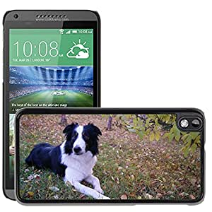 Super Stella Slim PC Hard Case Cover Skin Armor Shell Protection // M00148887 Border Collie Dog Canine Pet Animal // HTC Desire 816