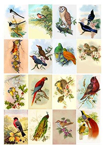 decoupage-paper-pack-10sheets-a4-8x12-amazing-birds-flonz-vintage-paper