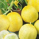 CUCUMBER - Lemon - 20 SEEDS [easy to...
