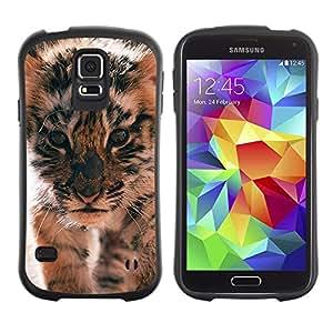 LASTONE PHONE CASE / Suave Silicona Caso Carcasa de Caucho Funda para Samsung Galaxy S5 SM-G900 / tiger cub roar cute puppy animal furry