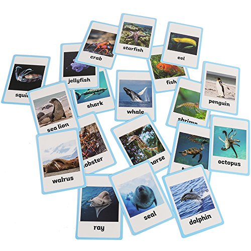Richardy 20PCS/Set Sea Animals Kids Gifts English Flash Cards Pocket Card Educational Learning Baby Toys For Children Pre-Kindergarten -