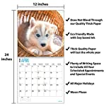 2020 Siberian Husky Puppies Wall Calendar by Bright Day, 16 Month 12 x 12 Inch, Cute Dogs Puppy Animals Chukcha Canine 9