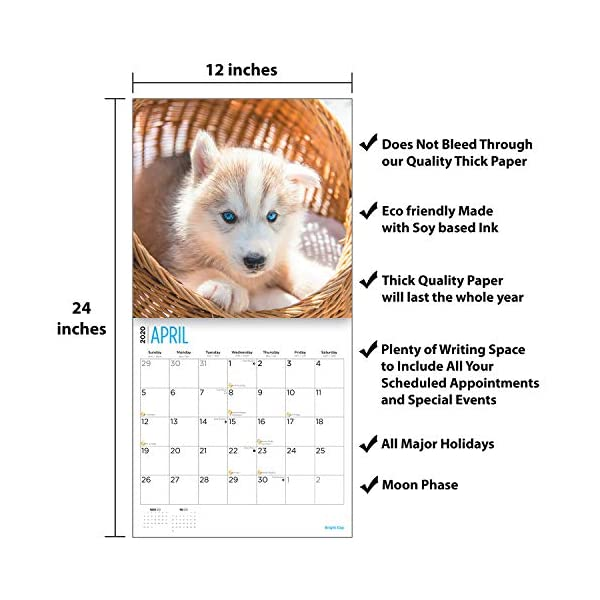 2020 Siberian Husky Puppies Wall Calendar by Bright Day, 16 Month 12 x 12 Inch, Cute Dogs Puppy Animals Chukcha Canine 4