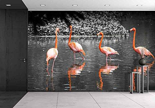 Group of Flamingo Bird in Lake