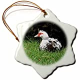 3dRose orn_158224_1 Muscovy Duck Lake Ella Tallahassee Florida Snowflake Ornament, Porcelain, 3""