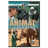 NATURE: Animal Reunions DVD