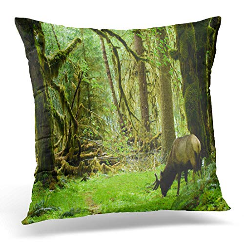Emvency Throw Pillow Cover Green Rainforest Roosevelt Elk in Olympic National Park Washington Decorative Pillow Case Home Decor Square 18