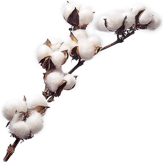 Natural decorativo en seco flores algodón ramo decoración para el ...