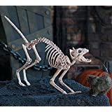 Creepy Cat Skeleton with Poseable Skull Halloween Prop Decoration 22 Inches Long by Oriental Trading Company