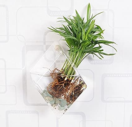 Amazon Pack Of 1 Glass Plant Pots Plant Containers Wall