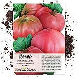 Seed Needs, Pink Brandywine Tomato (Lycopersicon esculentum) 80 Seeds Non-GMO