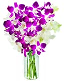 Exotic Opal Orchid Bouquet of 5 White Dendrobium Orchids & 5 Purple Dendrobium Orchids from Thailand with Free Vase Included
