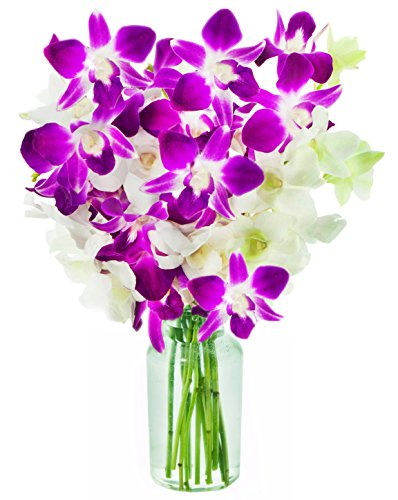 KaBloom Exotic Opal Orchid Bouquet of 5 White Dendrobium Orchids & 5 Purple Dendrobium Orchids from Thailand with - Bouquets White Orchid