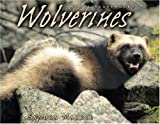 Wolverines (Animal Scavengers)