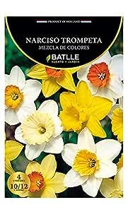 Bulbos - Narciso Trompeta mezcla colores - Batlle