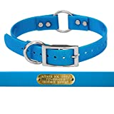 """1"""" Wide Solid Ring in Center Dog Collar Strap with Custom Brass Name Plate (Light Blue)"""