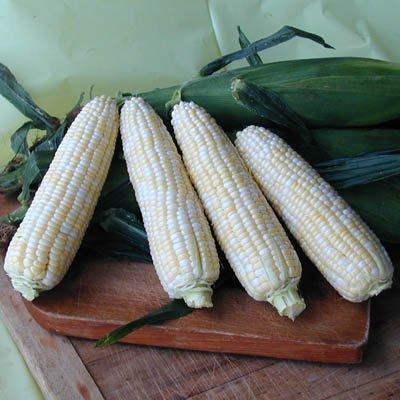 Sweet Corn Luscious F1 - Untreated Vegetable Seeds - 10,000 Seeds