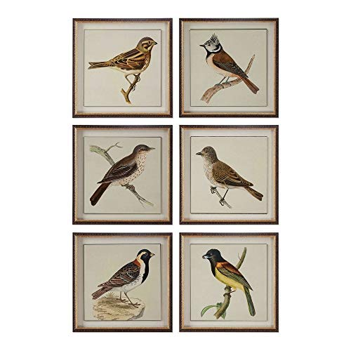 Uttermost 33627 Spring Soldiers Bird Prints, Set 6, Multicolor