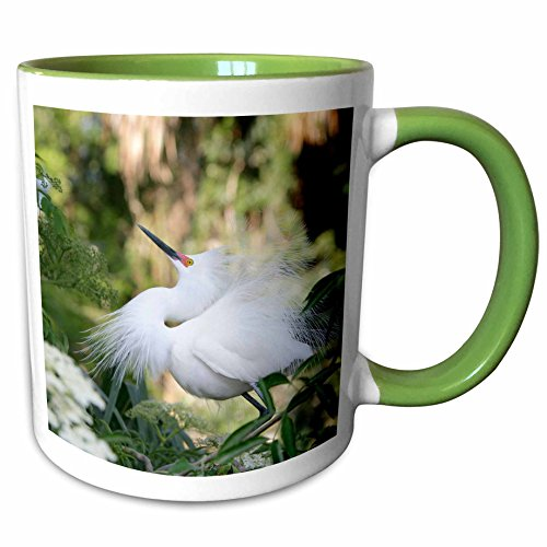 3dRose Danita Delimont - Birds - FL, St. Augustine Alligator Farm, snowy egret bird - US10 BJA0144 - Jaynes Gallery - 11oz Two-Tone Green Mug - Fl Augustine St Outlets