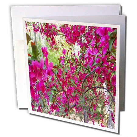 Spring Glorious (3dRose TDSwhite – Spring Seasonal Nature Photos - Springtime Glorious Flowering Tree - 6 Greeting Cards with Envelopes (gc_284370_1))