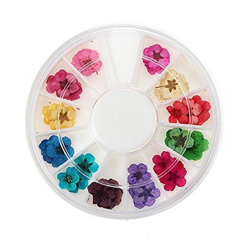 drying flowers for nail buyer's guide for 2019