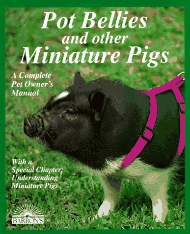 miniature pot belly pigs - 2