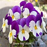 Garden Plant Pansy Seed 100 Flowers Seeds Pansy Colorful Yellow Blue Red Colors Bright Bonsai Seed