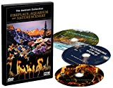 DVD Box Set - Fireplaces, Aquariums and Natural Scenery - 3 DVDs with Aquarium, Fireplace and Nature Landscapes Scenes